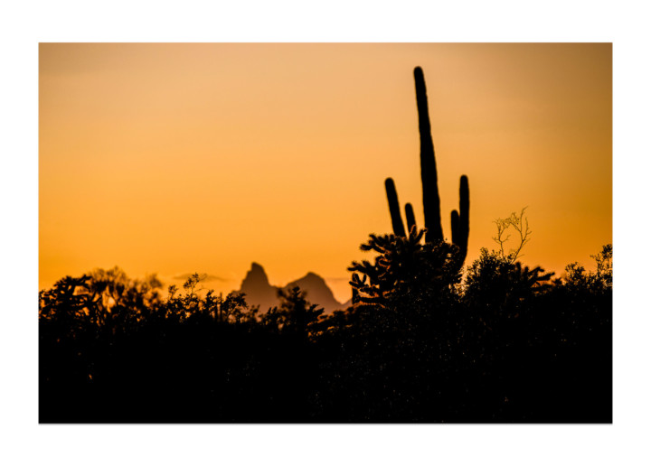 Golden Hour Cactus Silhouette, Nature Photography On White
